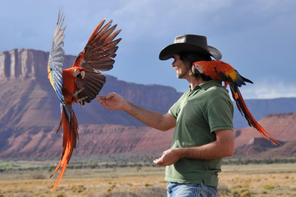 birdrecoveryinternational.com