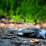 5 Gangguan Kesehatan Burung yang Harus Diwaspadai