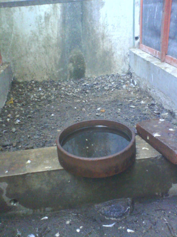 Source - delanggubirdfarm