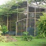 Penangkaran Kolibri