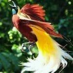 Cenderawasih, Hadiah Surga di Tanah Papua