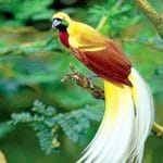 Daftar Burung di Indonesia yang Dilindungi Undang-Undang