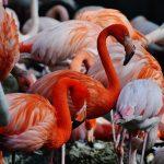 6 Keunikan Burung Flamingo, Spesies Cantik dari Belahan Bumi Timur