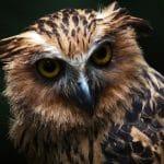7 Fakta Unik Burung Hantu yang Jarang Diketahui Orang