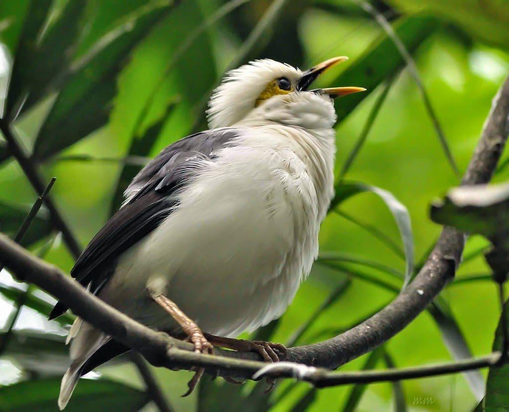 Burung Endemis Sumatera