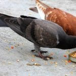 5 Hal yang Tidak Boleh Dilakukan Saat Burung Memasuki Masa Mabung