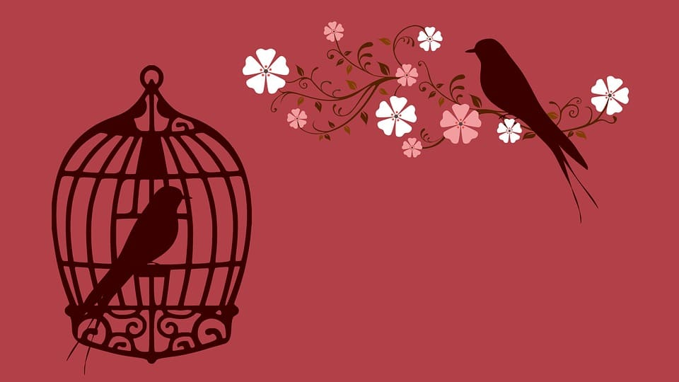 Relasi burung