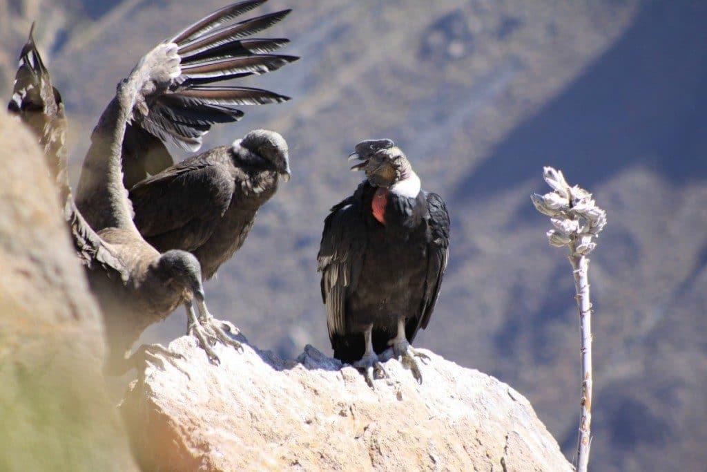 Burung Paling Di Takuti