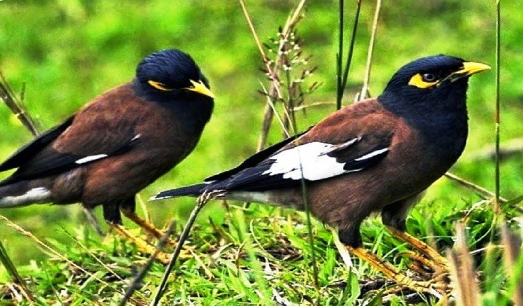 Jaga Kesehatan Burung