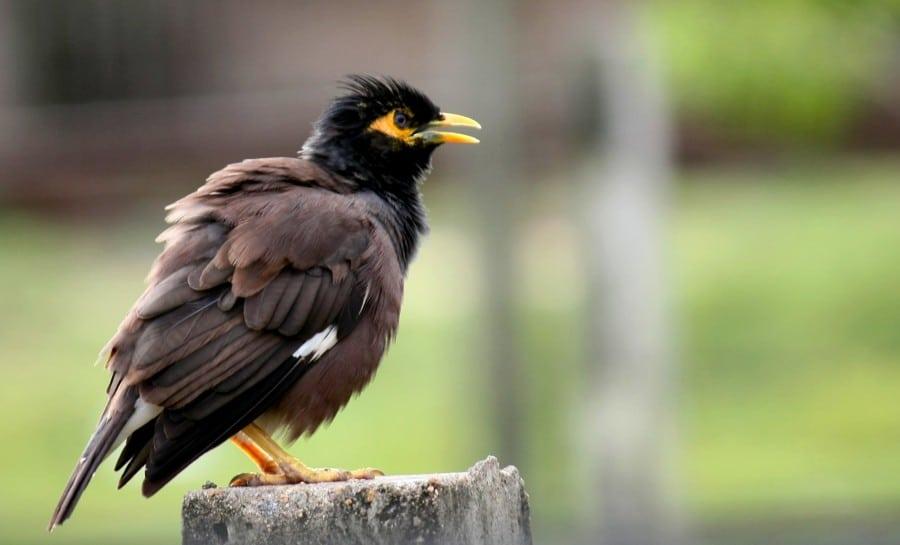 Jinakan Burung Perlahan - Lahan