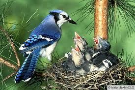 Burung pencuri makanan