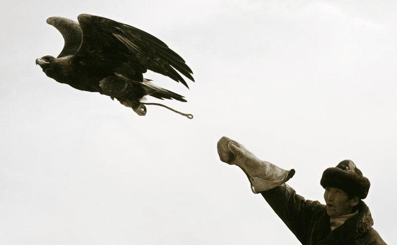 Menjinakkan Burung Elang