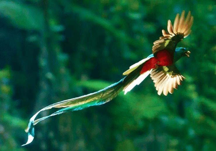 Burung Paling Aneh