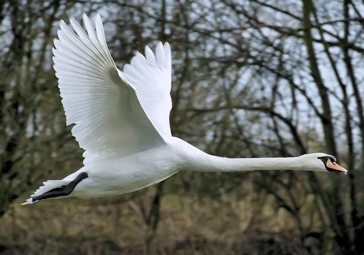 Burung Berleher Panjang