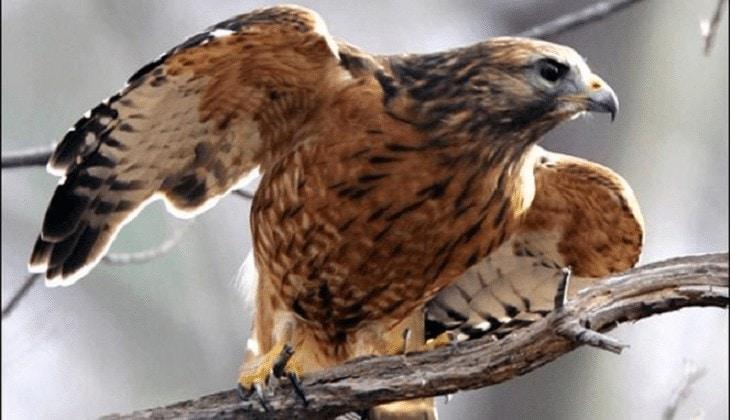 Burung Paling Ganas