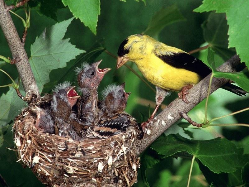 Menitipkan Telurnya Pada Burung Lain