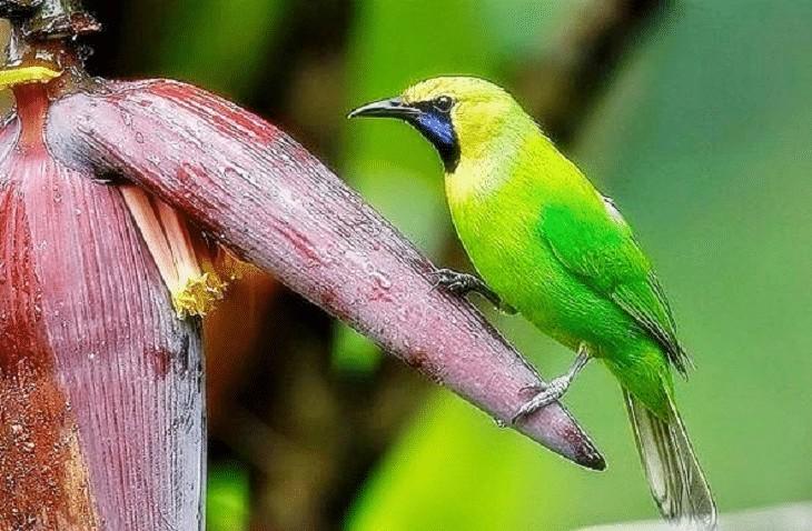 Habitat Burung Cucak Rante
