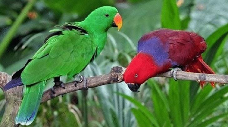 Jenis Burung Betet