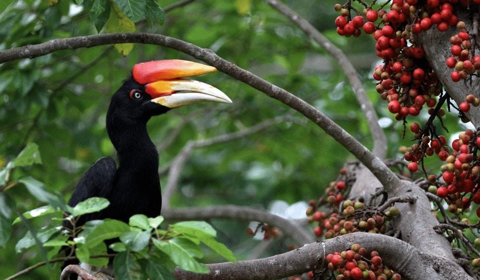 Makanan Burung Di Habitatnya