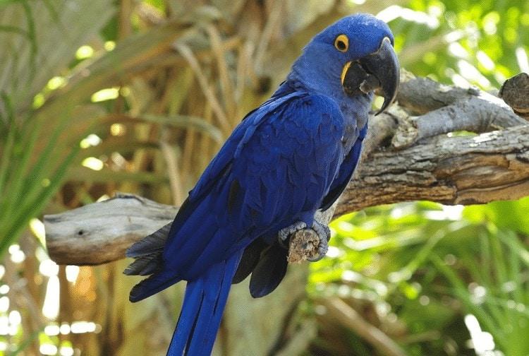 Kecerdasan Burung Macaw