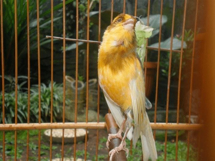 Burung dalam kondisi tidak sehat