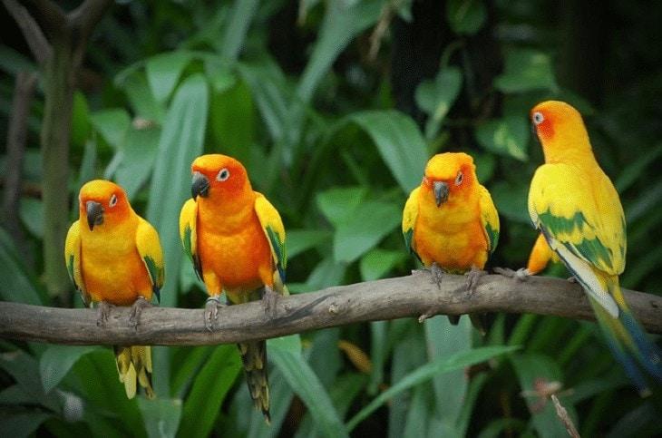 Jenis Lovebird Cantik Asal Afrika
