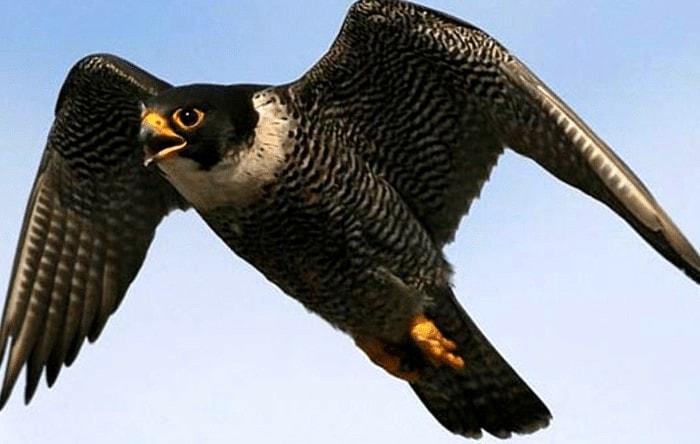 Habitat Burung Alap Alap Kawah