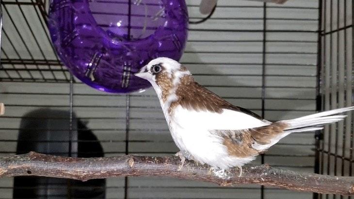 Burung Emprit Jepang
