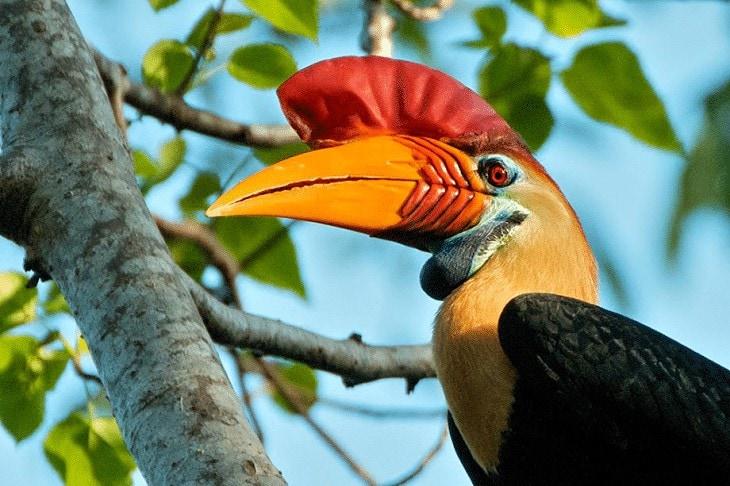 Ciri Khas Burung Julang Sulawesi