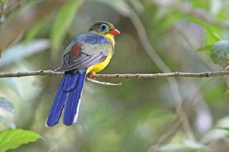 Habitat Burung Luntur Sumatera