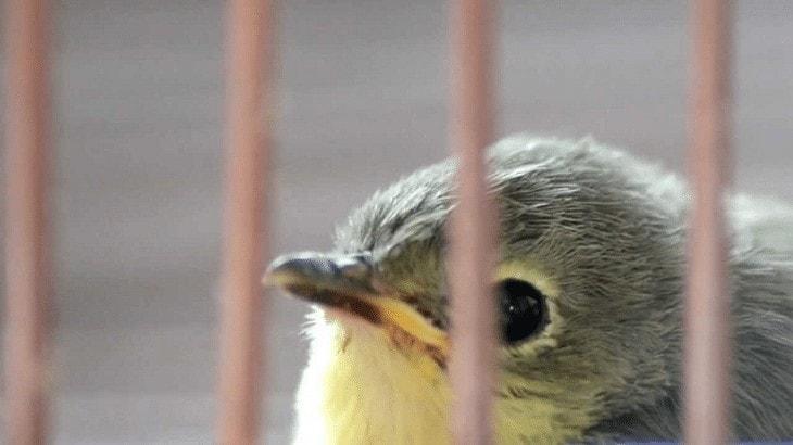 Perawatan Harian Burung Remetuk Laut