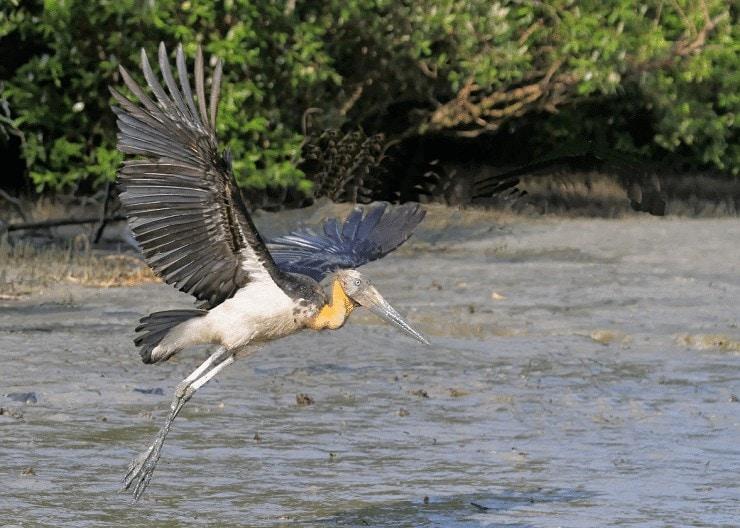 Ciri Khas Burung Bangau Tongtong