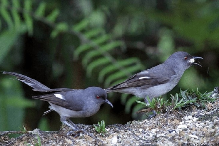 Habitat Burung Murai Air
