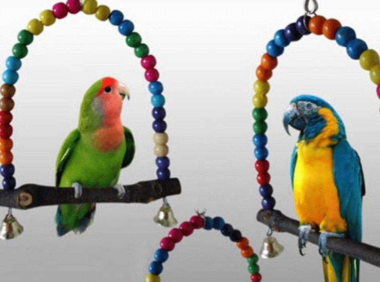 Ayunan Lovebird