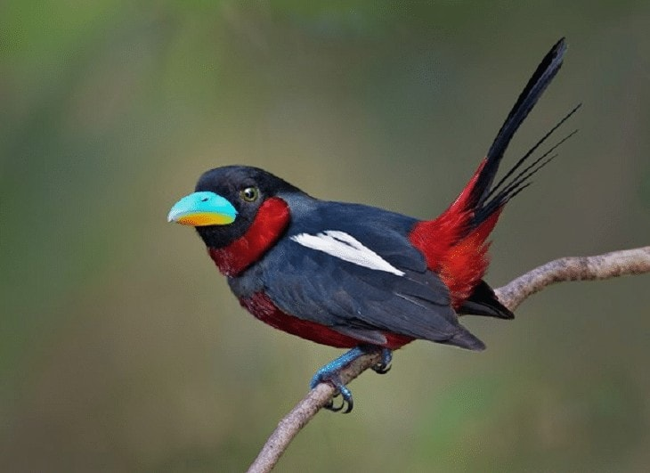 Burung Sempur Hujan Sungai