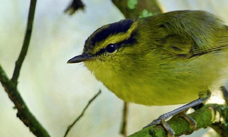 Karakteristik Burung Pare-pare
