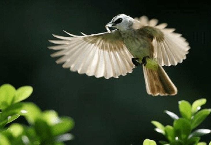 Burung Trucukan Menggaruda