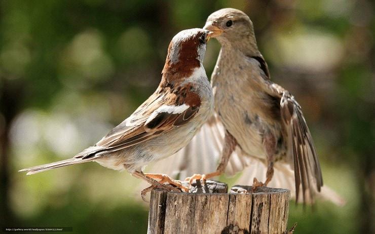 Melatih Mental Burung