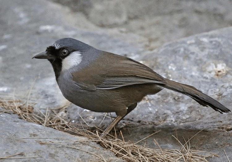 Alergi Pada Burung Kicauan