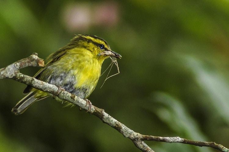Cara Merawat Burung Pare-Pare Agar Sehat dan Gacor 1
