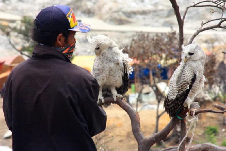 9 Cara Merawat Burung Hantu Yang Baik dan Benar Untuk Pemula 1