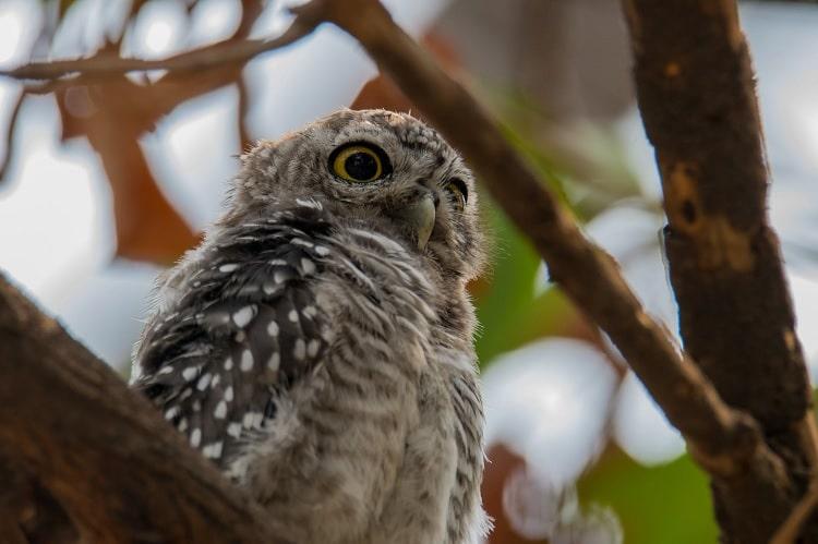9 Cara Merawat Burung Hantu Yang Baik dan Benar Untuk Pemula 2