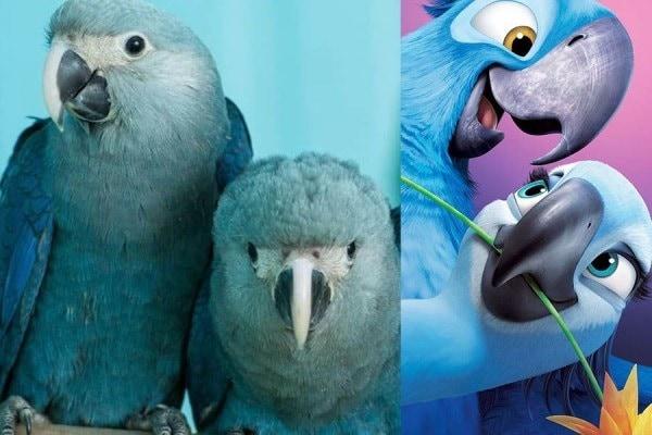 Fakta Menarik Seputar Burung Beo yang Seru Untuk Dibahas