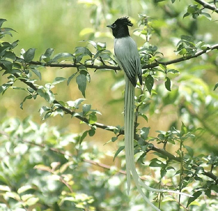 Keunikan dan spesies Burung Seriwang