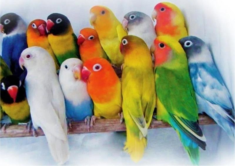 Jenis Burung Yang Tidak Mudah Stres Bisa Untuk Dipelihara